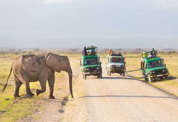 Tourists in safari jeeps watching and taking photos of big wild elephant crossing dirt roadi in Amboseli national park, Kenya. Panorama.