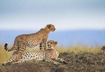 Masai mara 2