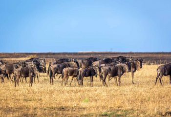 great migration 1 (2)