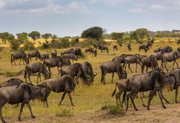 great migration 2 (2)
