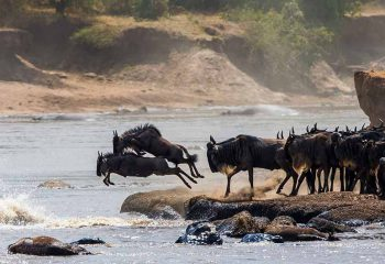 great migration 4 (2)