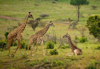 Arusha National Park 2